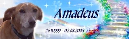 http://home.arcor.de/montycora1981/Amadeus02.jpg