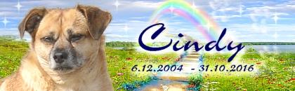 http://regenbogen7.bplaced.net/Regenbogenbr%fccke/Cindy01.jpg